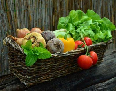 Kid' ado adulte maine et loire centre de loisirs jardin legume